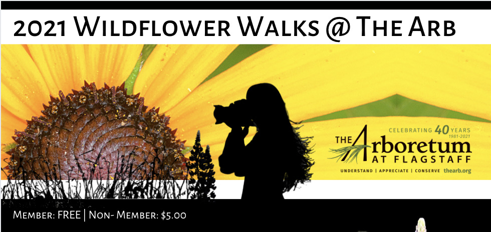 Wildflower Walks @ The Arb: Member: FREE | Non- Member: $5.00 Join our knowledgeable Arboretum staff on a morning walk through the gardens and explore the colorful varieties of native Northern Arizona wildflowers. Please bring water, a camera, comfortable walking shoes & a mask! 9:30 am. Outside. Limited to 10 socially-distanced participants. Reservations required at TheArb.org. May 22 | June 26 | July 24 | August 21 | September 18