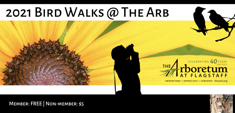 Bird Walks @ The Arb: Member: FREE | Non-member: $5 Join Dr. Celia Holm on a morning walk through The Arboretum at Flagstaff gardens. Over 130 different species have been sighted here! Please bring water, a camera, comfortable walking shoes and a mask! Outside. Limited to 10 socially-distanced participants. Reservations required at TheArb.org. All Bird Walks begin promptly at 7:30 am. May 8 | May 22 | June 5 | June 19| Sept 25